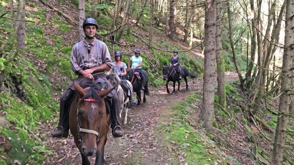 Cheval Hautes Pyrénées les Oréades Anatoly