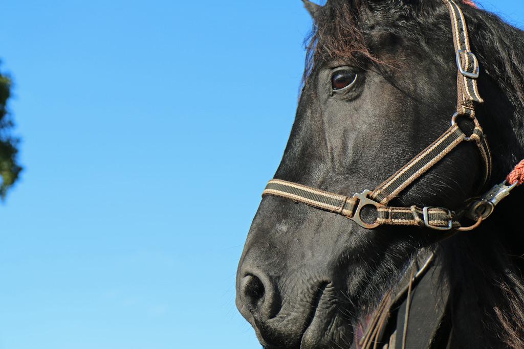 Cheval Hautes Pyrénées Les Oréades chevaux heureux
